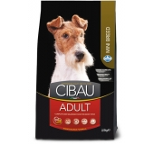 Dog adult  mini